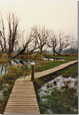 Totton Marshes